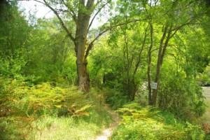 Por la ruta del Ebro